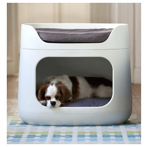 Choose Dog Bed Placement