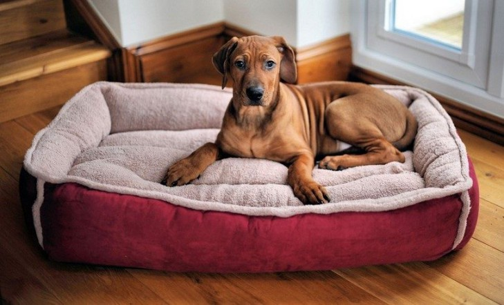 how to introduce new dog bed