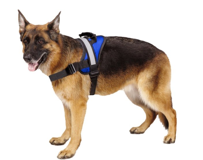 big dog harness main
