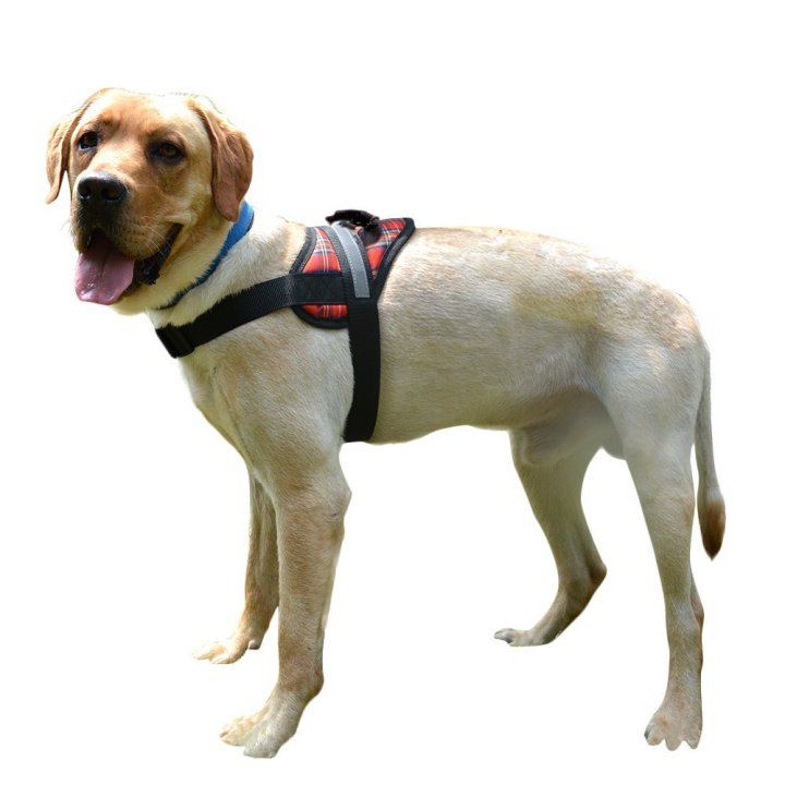 For Large Dogs Expawlorer Big Dog Harness