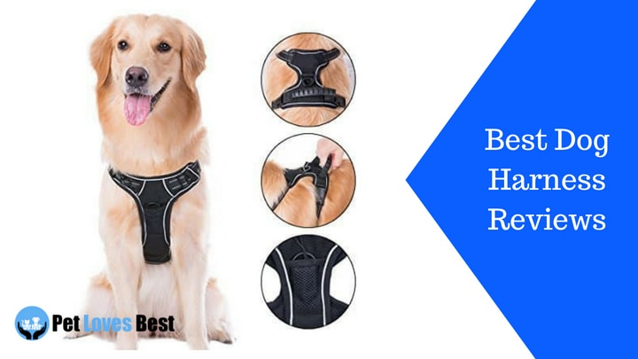 Featured Image Best Dog Harness Reviews
