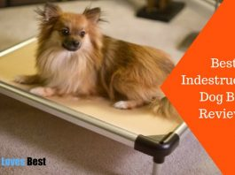 Featured Image Best Indestructible Dog Bed Reviews