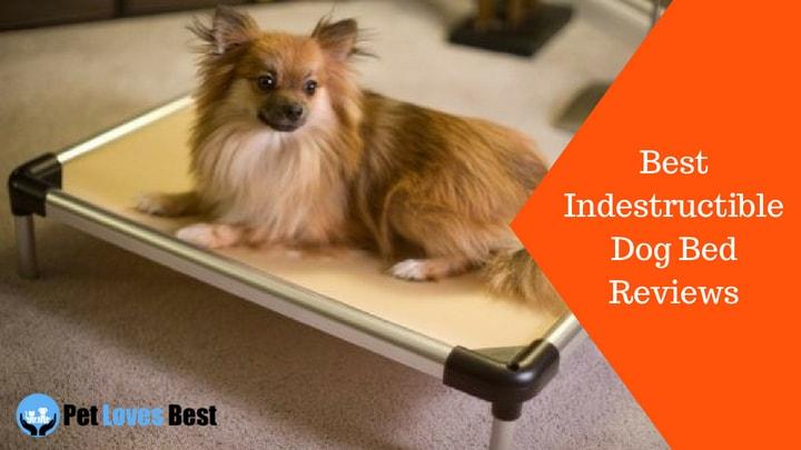 best indestructible dog bed