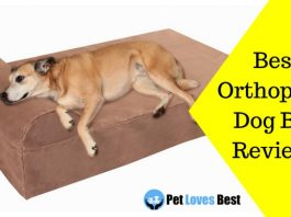 Featured Image Best Orthopedic Dog Bed Reviews