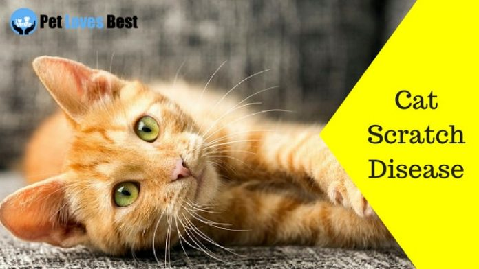Featured Image Cat Scratch Disease