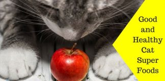 Featured Image Good and Healthy Cat Super Foods