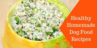 Featured Image Healthy Homemade Dog Food Recipes