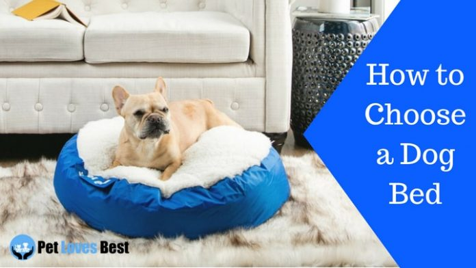 Featured Image How to Choose a Dog Bed
