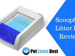 Featured Image Scoopfree Litter Box Review
