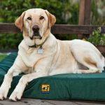 Indestructible Dog Bed K9-Ballistics-TUFF-Orthopedic-Memory-Foam-Dog-Bed-main