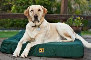 Best Tough Bed for Moderate Chewers
