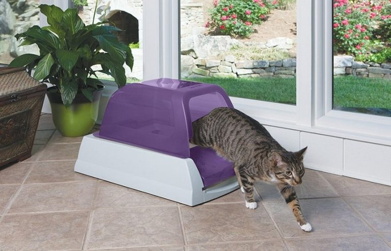 scoopfree ultra litter box