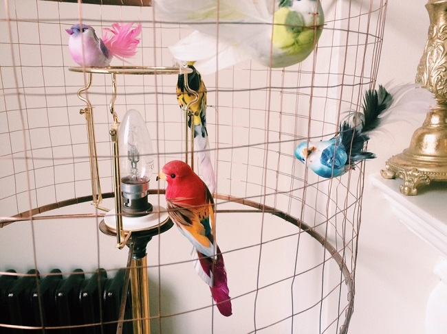 multiple-birds-inside-cage