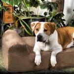 Orthopedic Dog Bed big barker