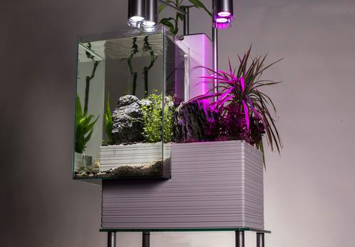 Aquaponics aquarium.