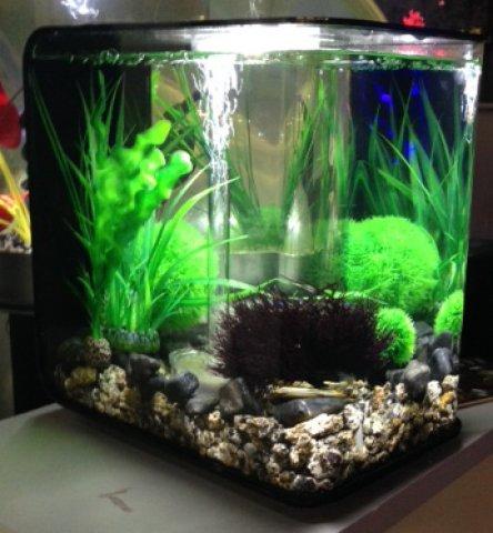 Self Cleaning Fish Tank aquarium
