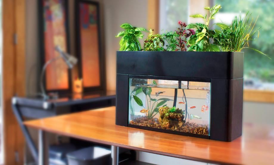 Garden Setup AquasproutSelf Cleaning Fish Tank