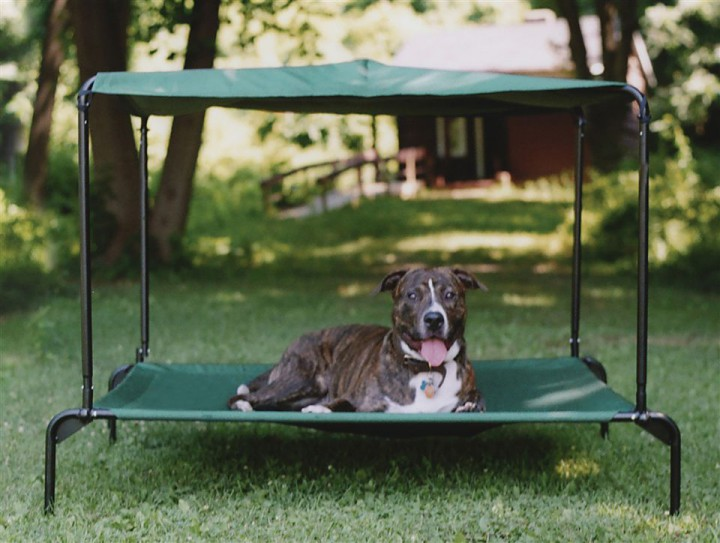 raised dog bed outdoors