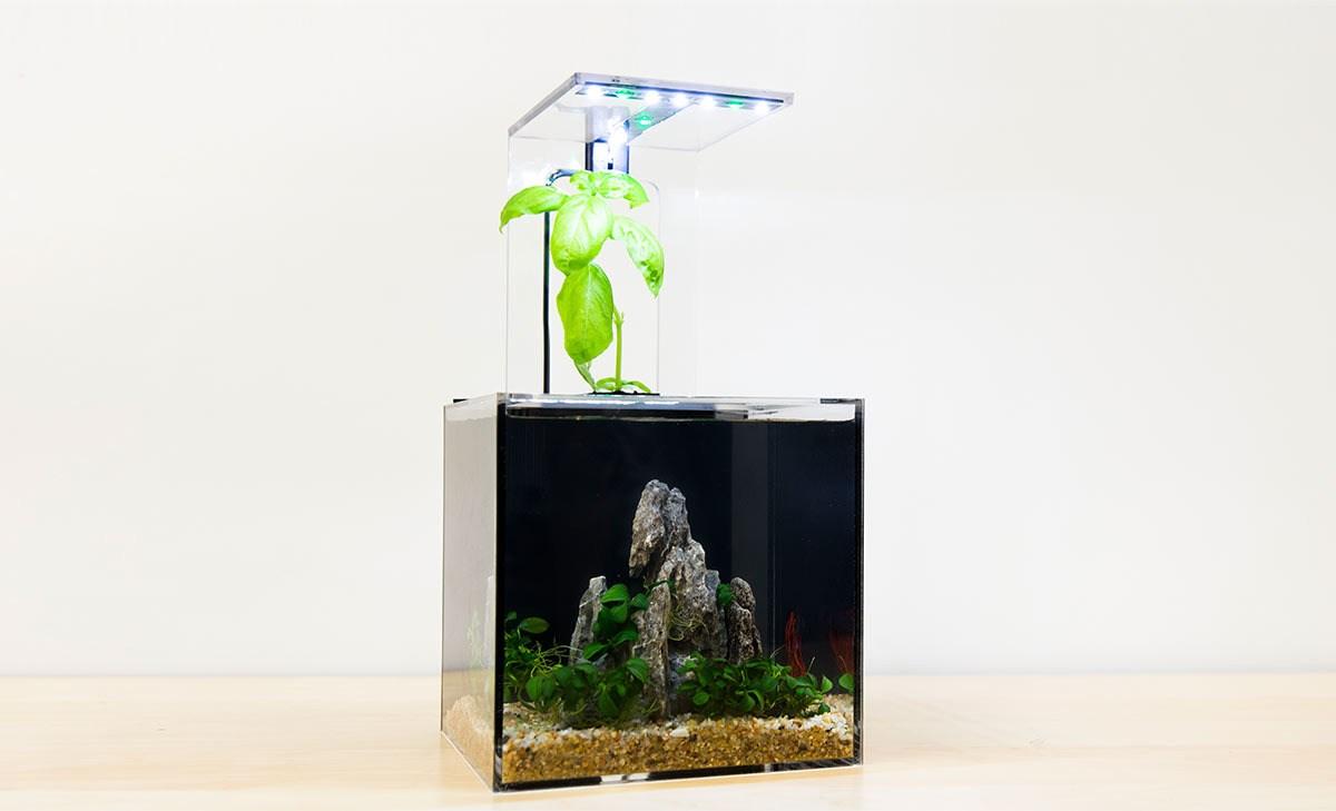 best self cleaning fish tank aquarium reviews of 2019