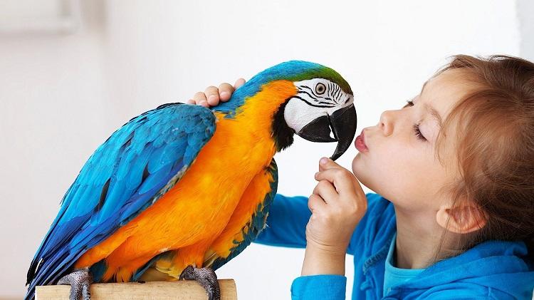 pet-bird
