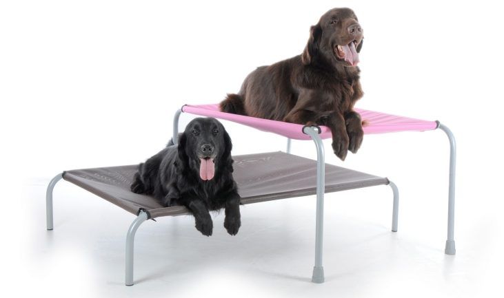 elevated dog bed benefits