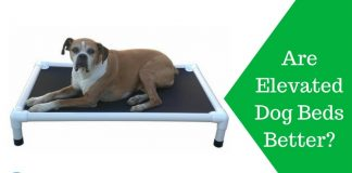 Featured Image Are Elevated Dog Beds Better