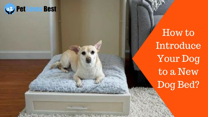 Featured Image How to Introduce Your Dog to a New Dog Bed