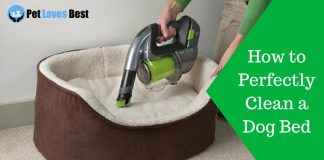 Featured Image How to Perfectly Clean a Dog Bed