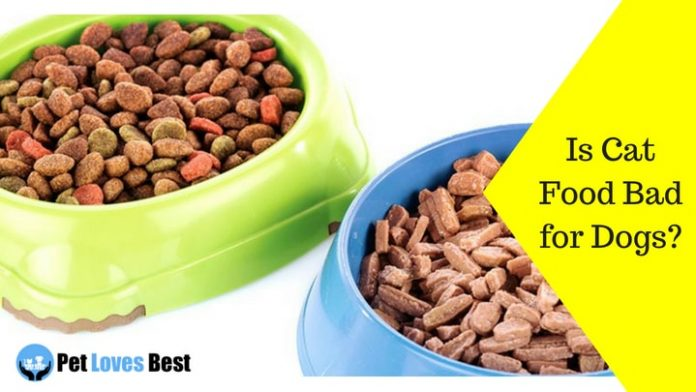 Featured Image Is Cat Food Bad for Dogs