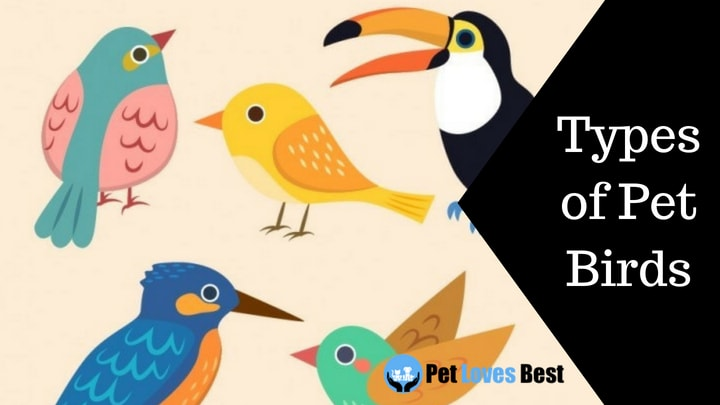 Featured Image Types of Pet Birds