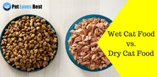 Featured Image Wet Cat Food vs. Dry Cat Food
