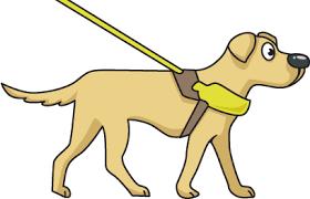 choose a dog harness