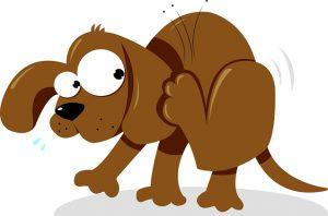 BEST DOG FLEA SHAMPOO REVIEWS