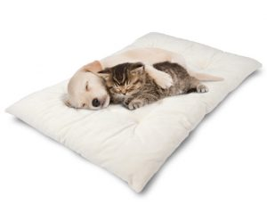 pillow-beds-for-cats