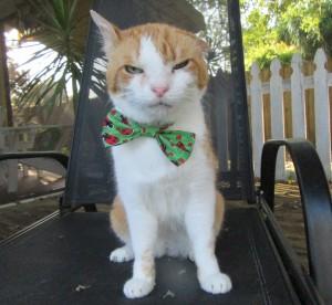 Cat Depot Blog