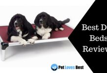 Featured Image Best Dog Beds Reviews