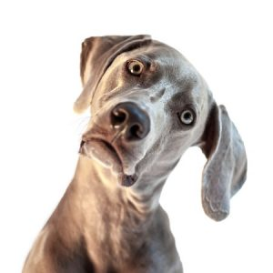 funny dogs facts
