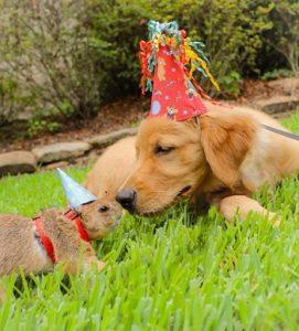 prairie dog facts