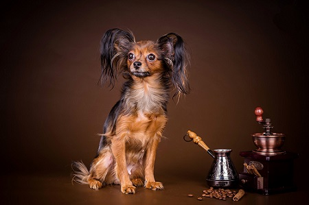 one of the smallest dog breeds