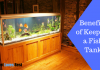 Featured Image Benefits of Keeping a Fish Tank