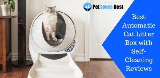 Featured Image Best Automatic Cat Litter Box with Self-Cleaning Reviews