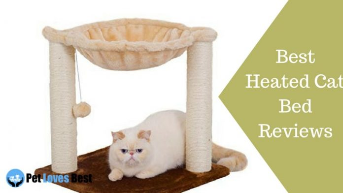 Featured Image Best Cat Bed Reviews