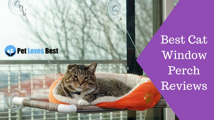 Wondrous 7 Best Cat Window Perch And Beds Reviews Of 2019 Pet Loves Andrewgaddart Wooden Chair Designs For Living Room Andrewgaddartcom