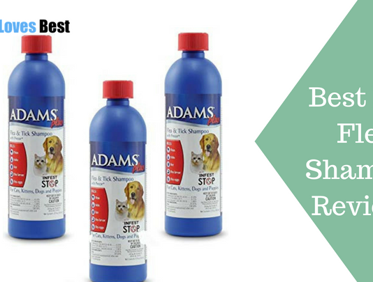 Featured Image Best Dog Flea Shampoo Reviews