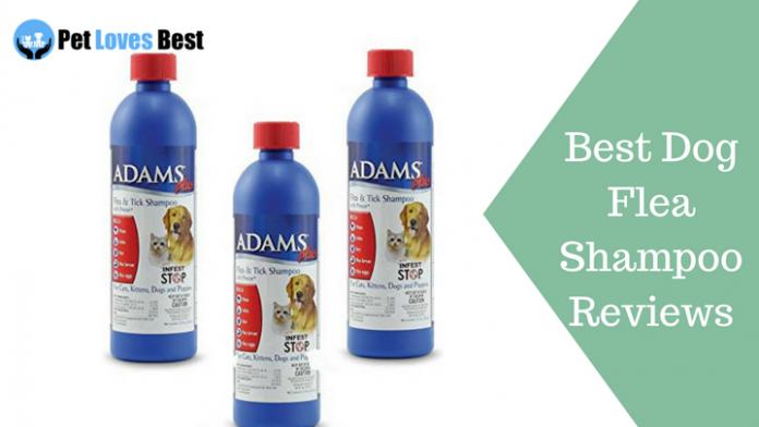 Featured Image Best Dog Flea Shampoo Reviews