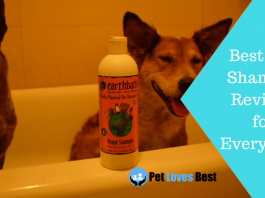 Featured Image Best Dog Shampoo Reviews For Every Skin
