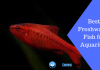 Featured Image Best Freshwater Fish for Aquarium
