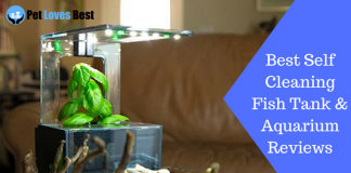 Featured Image Best Self Cleaning Fish Tank & Aquarium Reviews