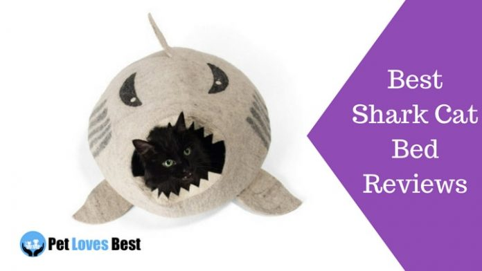Featured Image Best Shark Cat Bed Reviews