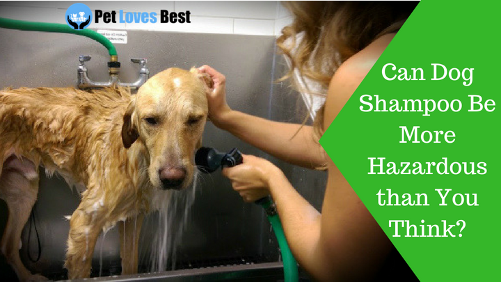 Featured Image Can Dog Shampoo Be More Hazardous than You Think